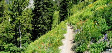 hiking trail and flowers