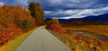 paved trail surrounded by fall foliage