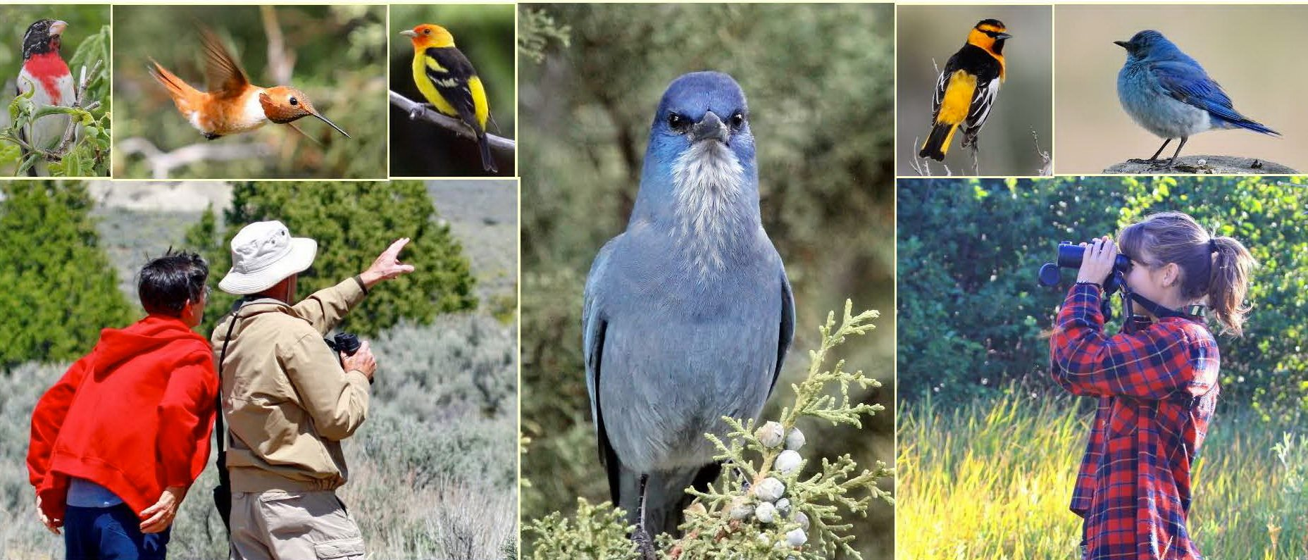 Collage of various birds and people birding at Castle Rocks/City of Rocks