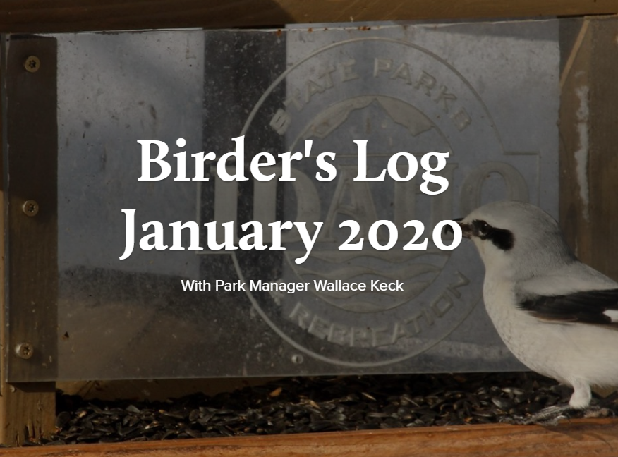 Birder's log January 2020