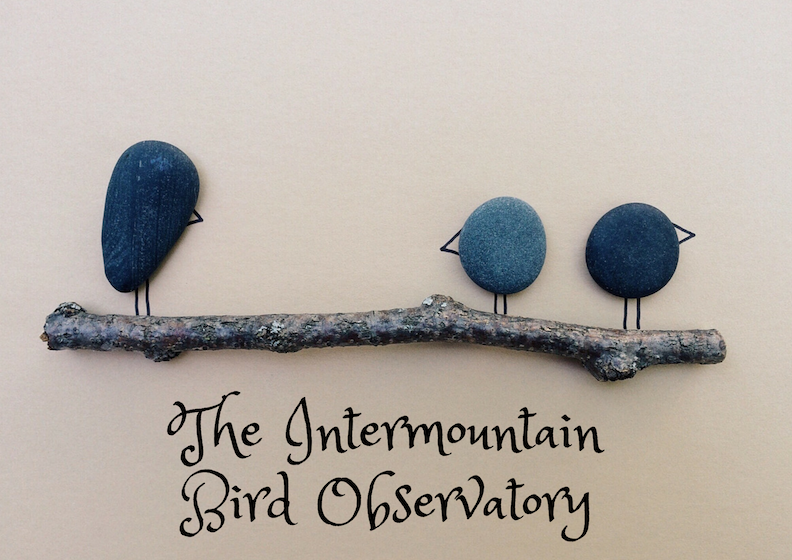 the intermountain bird observatory