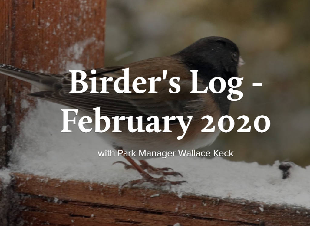Birder's log - February 2020